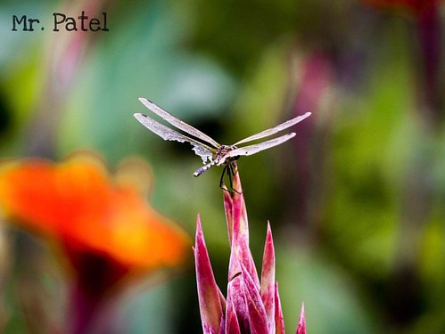 #photography #streetphotography #garden #flowers #butterfly  @streets.of.mumbai @streets.of.delhi @streetphotographers @streetphotographydelhi @streetphotographyindia @streetphotographymumbai @streets.of.maharashtra @streetphotographyinternational @street