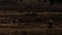 Glowing Monkeys (Thomas Retterath) Tags: wildlife 2017 nature natur wald forest kanha asien asia indien india thomasretterath semnopithecus indischelanguren affen säugetier mammals animals tiere langur