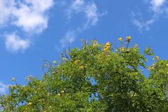 Caatinga after rain (clborba) Tags: montealegra sergipe montealegredesergipe caatinga