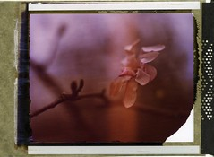 (er_code_blue) Tags: graflex crowngraphic polaroid 79 expired instant analog largeformat 4x5 film polaroidweek