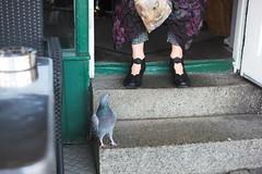 L1004128_v1 (Sigfrid Lundberg) Tags: lund animals sweden skåne botulfsplatsen pigeons leica aposummicronm 50mmf20asph restaurangbotulf