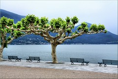 It's springtime in south of Switzerland (Bernergieu) Tags: switzerland ticino springtime trees lake waterside lagomaggiore bench bank see smileonsaturday seasonsbeauty platane