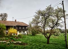 Unterholz - Irschenberg