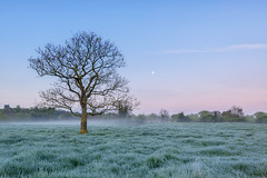 Frosty Morning (jactoll) Tags: morning light mist tree misty landscape dawn nikon nikkor predawn warwickshire morningmist d610 alcester dawnmist 1635mmf4 jactoll nikonfxshowcase