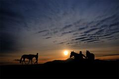 Last walk before sunset (robsm) Tags: sunset horses people seascape nature clouds training landscape nikon flickr robsm flickrstruereflection1 magicmomentsinyourlife magicmomentsinyourlifelevel2 magicmomentsinyourlifelevel4