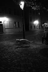 Somewhere (Michaela Kostkov) Tags: street motion digital canon eos 350d iso800 prague praha f45 canon350d streetshot 1125 motionshot digitalblackandwhite digitalshot dynamicmoment michaelakostkov motionmoment