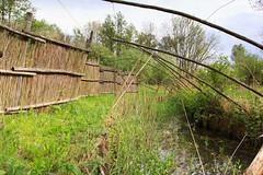 Old duck decoy (RunningRalph) Tags: nature nederland gelderland waardenburg duckdecoy eendenkooi tbroek enspijk