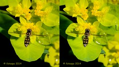 1811_3d (fotoopa) Tags: 3d highspeed flyinginsects insectsinflight fotoopa 3dinsects inflight3d