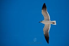 Birds Flying in The Sky Blue Sky White Bird Nature