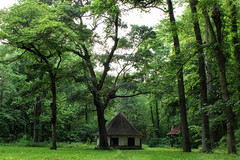 (Elizabeth Kabakjian) Tags: old trees summer plants green spring scene historic hut greenery wooded