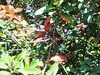 CIMG6422 (kazadmanesh) Tags: و بهار خشکسالی