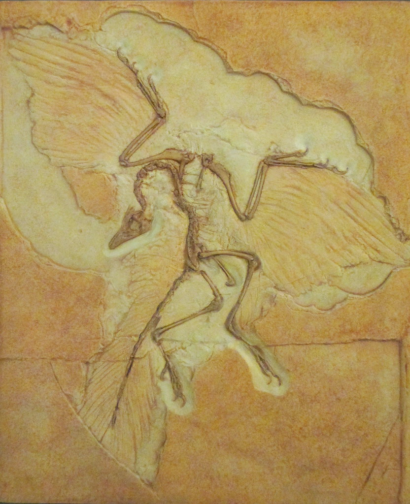 Archaeopteryx Museum Natural History Nyc