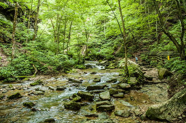 Donaldson's Cave Nature Preserve - Spring Mill State Park - June 8, 2014