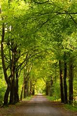 Nijreesbos Almelo (2014) (l-vandervegt) Tags: holland green netherlands groen forrest nederland bos twente overijssel niederlande 2014 almelo nijreesbos