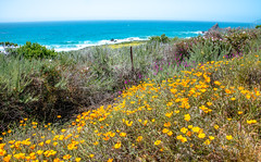 Big Sur Spring Wildflowers! Nikon D800E Dr. Elliot McGucken Fine Art Landscape & Nature Photography for Los Angeles Fine Art Gallery Show ! (45SURF Hero's Odyssey Mythology Landscapes & Godde) Tags: show california seascape art beach nature lens landscape ed photography for landscapes photo los big high nikon raw gallery dynamic angle zoom angeles d dr fine wide wideangle malibu southern socal yosemite sur coastline wildflowers mp mm nikkor elliot 36 range 800 hdr afs d800 matix photomatix mcgucken f28g 1424 1424mm elliotmcgucken d800e elliotmcguckenphotograhy elliotmcguckenfineartphotographylandscapenaturearizonautaharchesnationalparkutahthedelicatearchdelicatearch