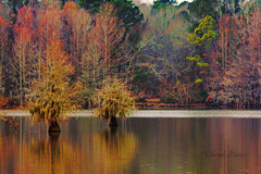 Santee in Winter (mizcaliflower) Tags: lake color water southcarolina lakeside cypress santee