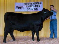 "Div Champion Angus State Preview Show '10 • <a style=""font-size:0.8em;"" href=""http://www.flickr.com/photos/25423792@N05/14250818590/"" target=""_blank"">View on Flickr</a>"