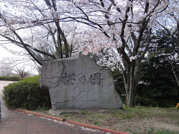 ちょうど桜が満開を迎えていたので、桜の園にも立ち寄りました。|大高緑地