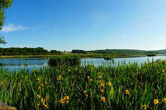 Panoramic Public Hide (Rovers number 9) Tags: england june day sony lancashire clear a77 2014 rspbleightonmoss sonya77 june2014