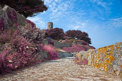 Once Upon a Guernsey Path - Lavender Fantasy