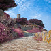 Guernsey Scenery - Violet HDR
