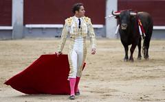 The Strut (San Diego Shooter) Tags: madrid spain europe bull bullfight bullfighting matador torero sanisidro corridadetoros lasventas spanishbullfighting nathanrupert2014spainwithbull