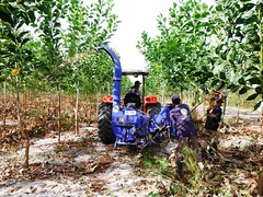 GWD Forestry wattle forestry (GWD Forestry - Brazil) Tags: forestry invest gwdforestry