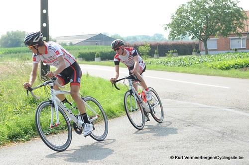 Geel Oosterlo  (157)