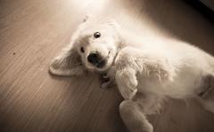 DSC_0940 (Manuel D Snchez) Tags: dogs perros dogos seleccionar