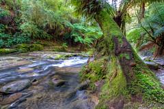 Erskine Falls (Craig Carvell) Tags: ocean road stream great greatoceanroad erskine erskinefalls