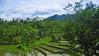 IMG_2439 (deoka17) Tags: bali sawah subak irigasi alambali sawahterasering