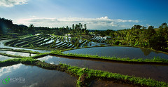 IMG_6776_Morning From Bali (gedelila) Tags: morning bali indonesia landscape stockphoto jatiluwih subak sawang gedelila