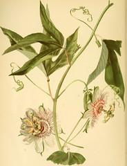 Anglų lietuvių žodynas. Žodis class ciliata reiškia klasės ciliata lietuviškai.