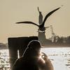 mco-2544 (Spacelandbook) Tags: ny newyork canon liberty us liberdade statueofliberty seagal fredoom sx120