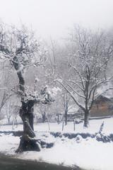 White-Out at Pahalgam (Kashmir) (Shuddho1980) Tags: snow pahalgam kashmir lgg4