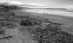 Driftwood Beach _ bw (Joe Josephs: 3,166,284 views - thank you) Tags: california californialandscape joejosephs landscapes travel travelphotography californiacoast fineartphotography landscape landscapephotography outdoorphotography westcoast â©joejosephs2017 blackandwhitephotography blackandwhite storms wood driftwood ©joejosephs2017 cayucos photojournalism pacificocean pacificcoasthighway beaches beach californiabeaches