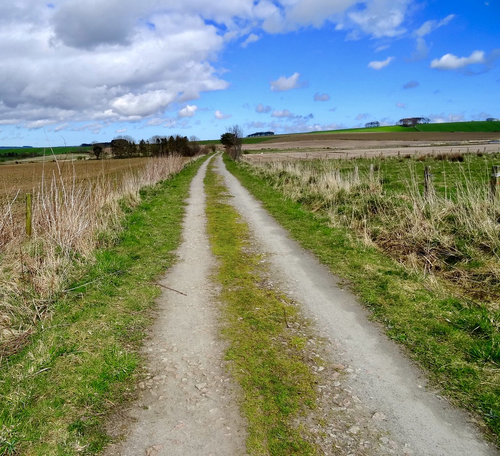 midlothian sunny landscaping lawncare