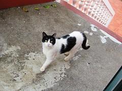 IMG_7602 - Joana (Chat Malicieux) Tags: cat joana
