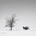 Heading Home explored (betty wiley) Tags: amish pennsylvania buggy horse winter snow seasons country tree bettywileyphotography lancaster folk stark