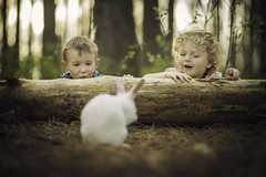 Easter Surprise (Phillip Haumesser Photography) Tags: easter rabbit bunny kids boys children fun surprise sony rokinon 85mm philliphaumesser