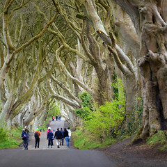 Dark Hedges (jamiegaquinn) Tags: northern ireland nireland norniron antrim dark hedges darkhedges avenue beech trees countryfile gameofthrones beechtrees northernireland countryfilecalendar