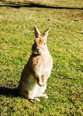 Una carotina, no? (stefano.al2) Tags: samsungnx3000 animali coniglio