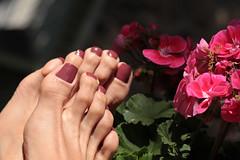 Coco (IPMT) Tags: toenail sexy toes polish foot feet pedicure painted toenails pedi zoya barefoot barefeet marsala mauve brown red purple undertones creme finish coco descalza plum rojo vermelho