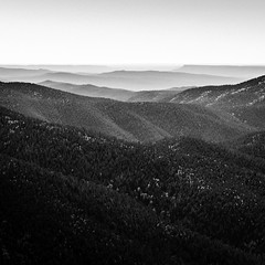 New Mexico Waves (Mabry Campbell) Tags: 2016 h5d50c hasselblad mabrycampbell newmexico october santafe santafecounty santafenationalforest usa unitedstatesofamerica above aerial aerialphotography autumn blackandwhite commercialphotography fall fineart fineartphotography forest image landscape monochrome mountains photo photograph photographer photography squarecrop trees f63 april 2015 april152015 20150415h6a5118 24mm 50sec 100 tse24mmf35lii
