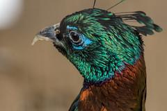 animal bird zoo tennoji