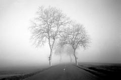 OLYMPUS 35 RC FOMA 100 à 200 LC29 (Leinik) Tags: olympus 35 rc foma 100 à 200 lc29 tree trees fog brouillard