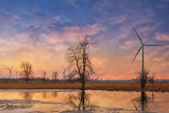 Wolfe Island Sunset (Tracy Munson Photography) Tags: canada ontario wolfeisland clouds evening kingston landscape reflection renewableenergy rural sunset sustainability sustainableenergy tourism trees windfarm windpower windmills winter
