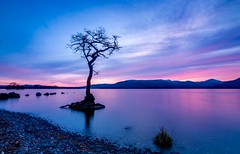 Loch Lomond (debraduncan1960) Tags: loch lomond lone tree water reflections sunset