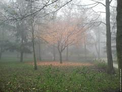 Parure d'automne (Fontenay-sous-Bois Officiel FRANCE) Tags: fontenay fontenaysousbois valdemarne 94 94120 iledefrance regionparisienne france fsb automne autumn feuilles leaves tree fog outside exterieur