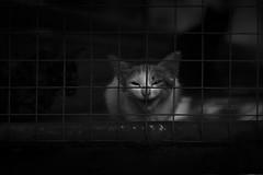 CAGED (Premnath Thirumalaisamy) Tags: cats wyanad premnaththirumalaisamy monochrome blackandwhite symmetry